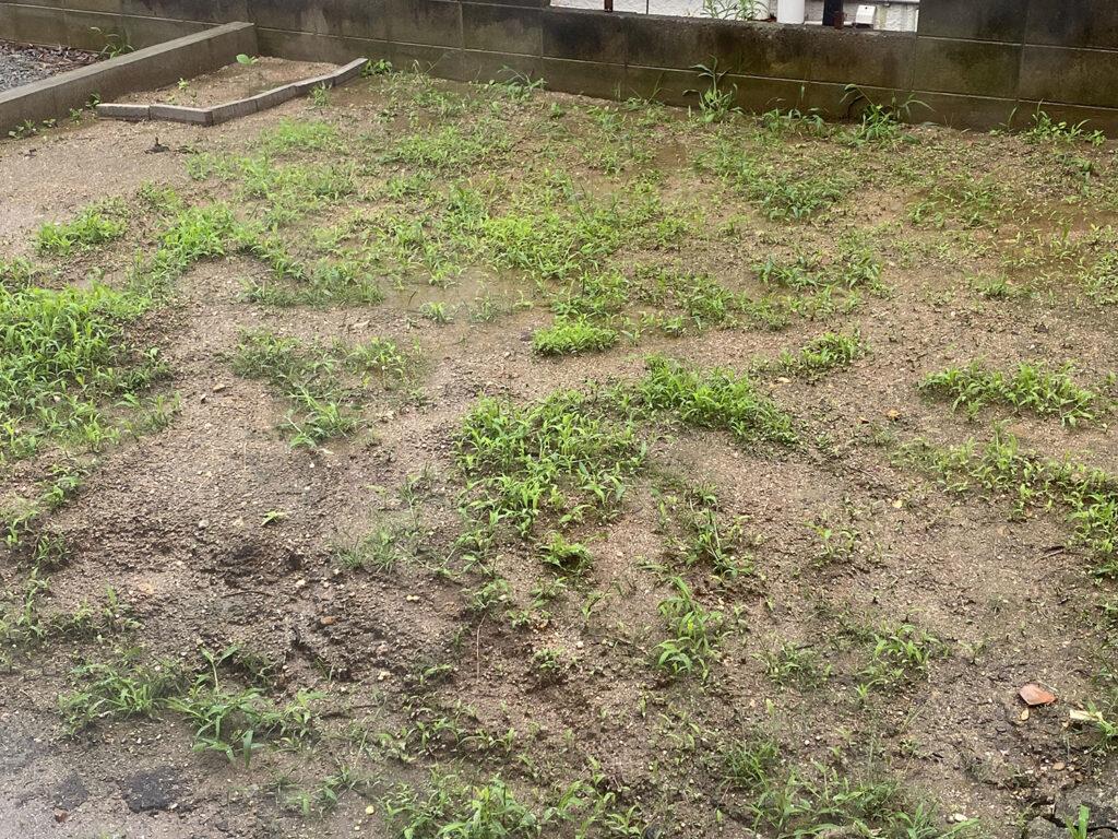 一週間草むしりを放置した庭